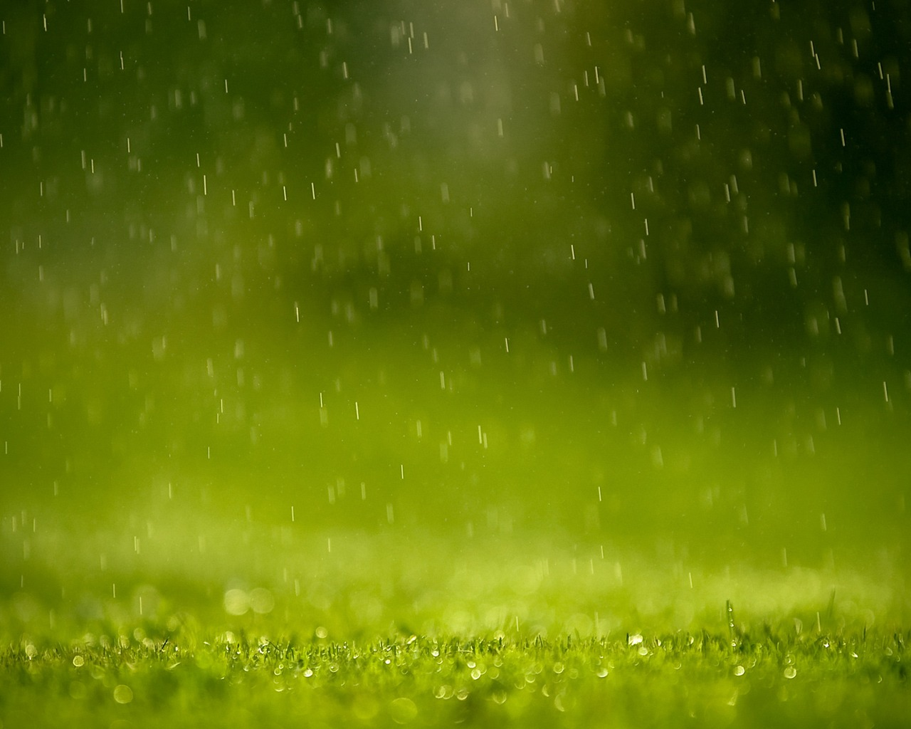 rain wallpaper grass   2765   The Wondrous Pics 1280x1024