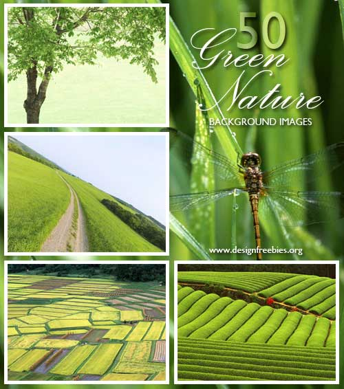 green nature wallpaper background 500x566