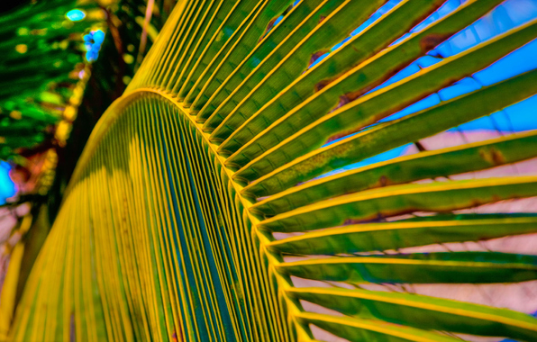 Wallpaper summer palm tree leaf macro wallpapers nature   download 596x380