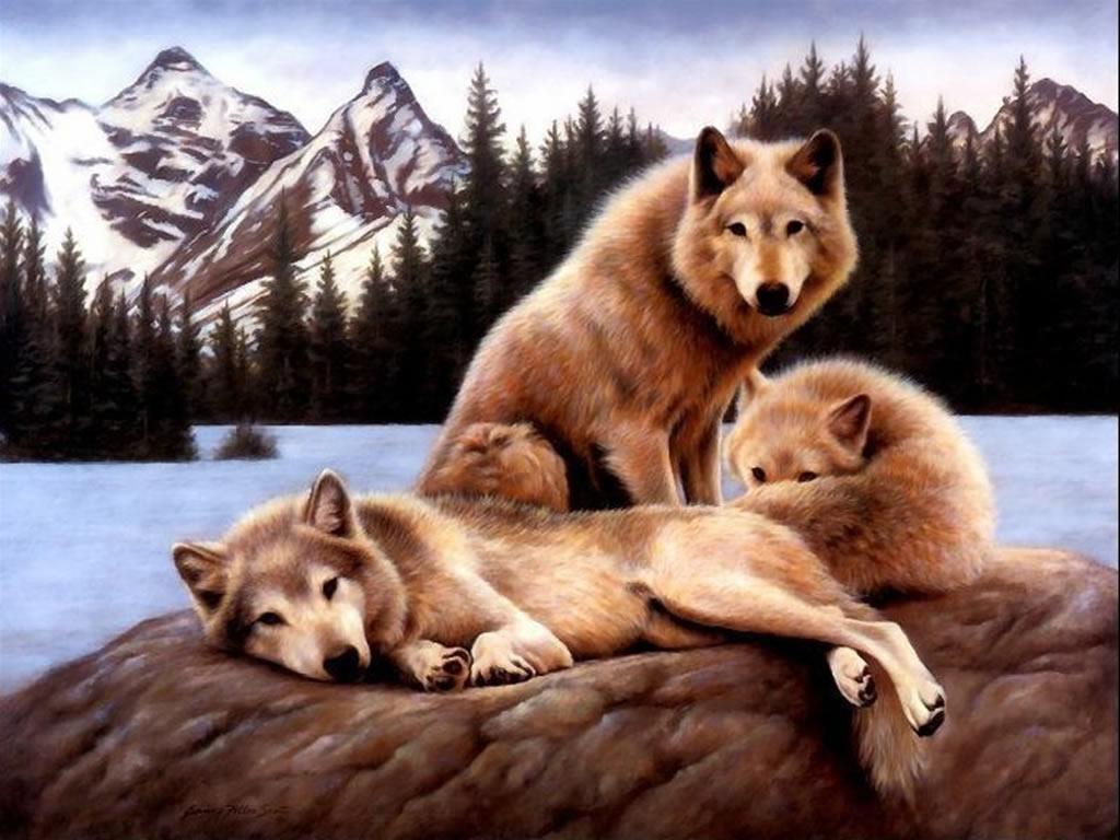 Fond Dcran les loups 1024x768