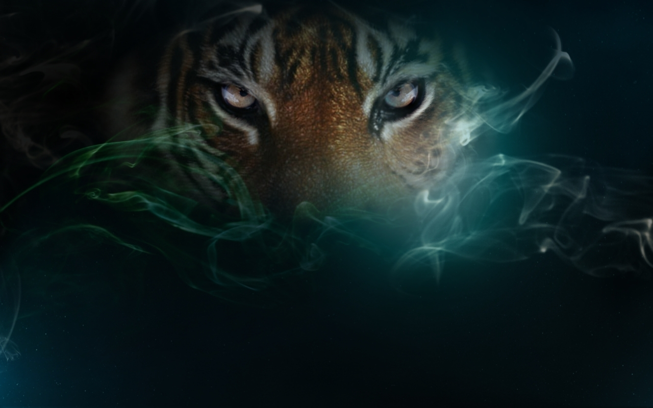 Cool Tiger Wallpapers  WallpaperSafari