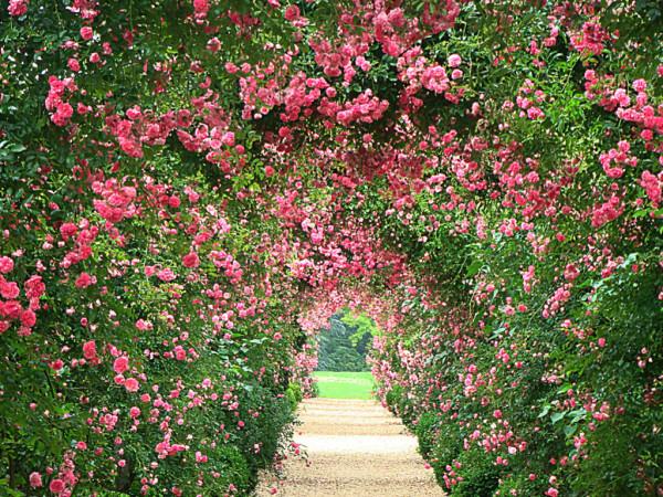 Rose Garden Wallpapers wallpaper Rose Garden Wallpapers hd wallpaper 600x450