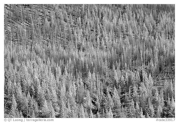 Park Canadian Rockies British Columbia Canada black and white 576x393