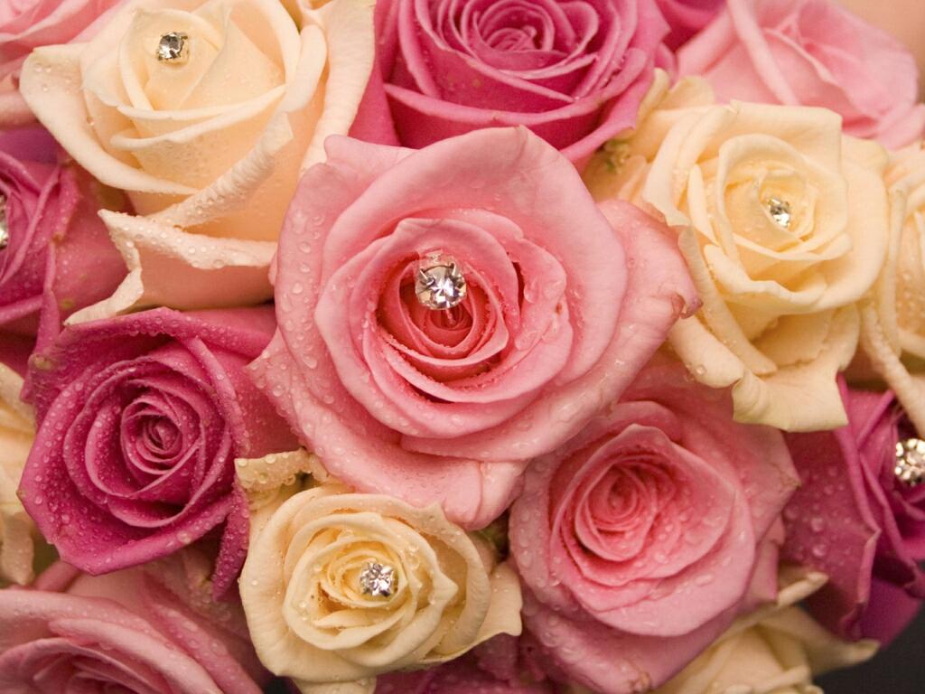 1024x768px Pretty Roses Wallpapers Wallpapersafari
