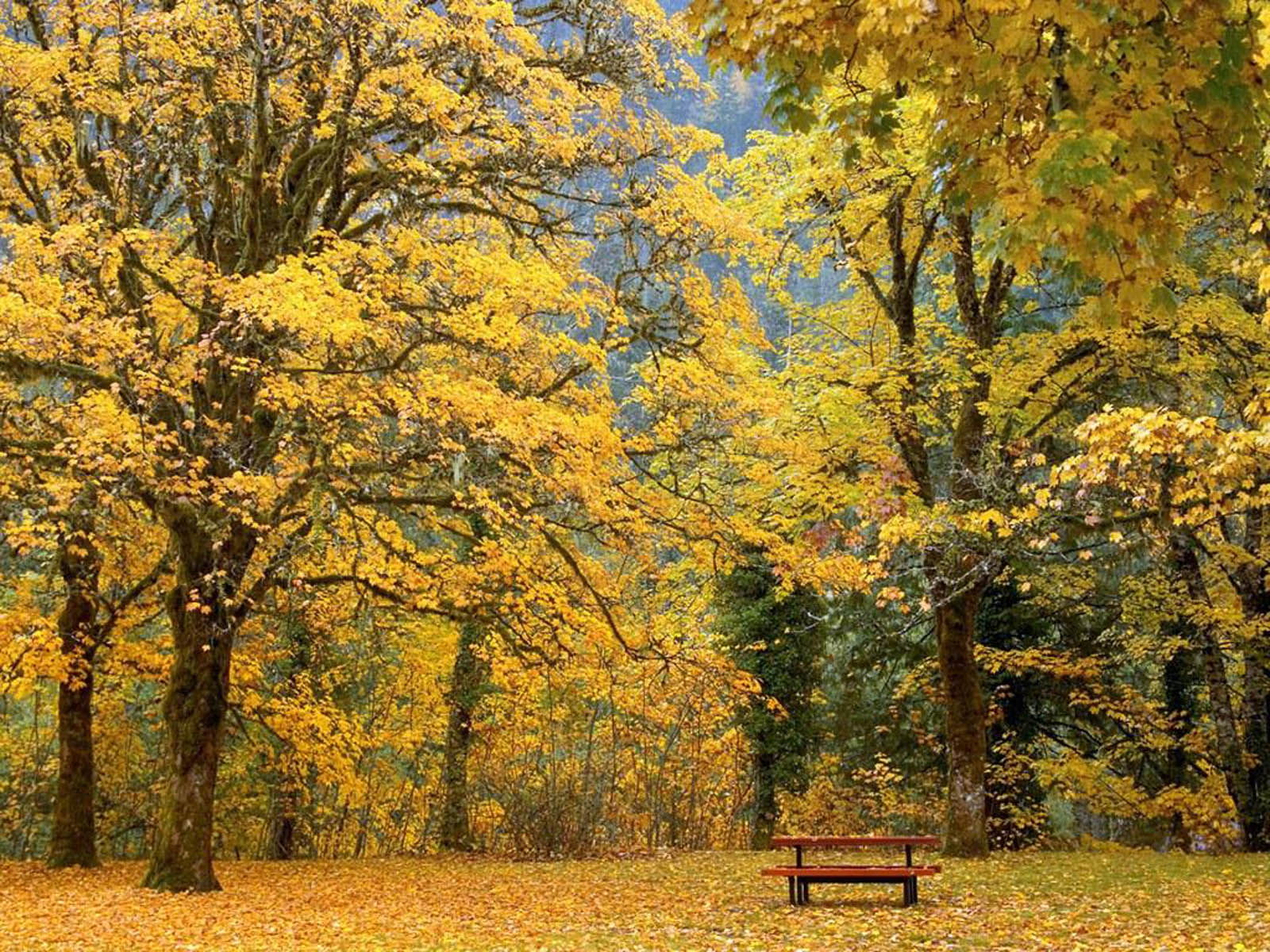 Autumn Scenery Wallpapers Beautiful Autumn Scenery Desktop Wallpapers 1600x1200