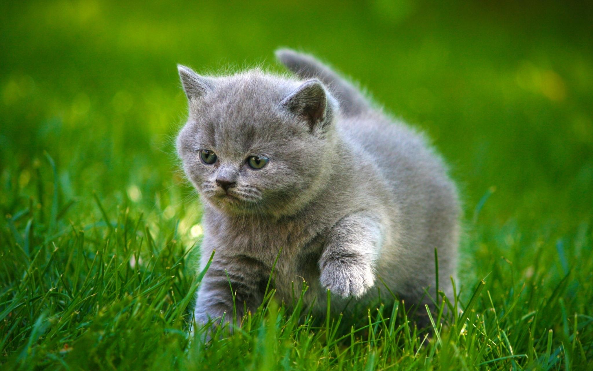 природа животные кот котенок серый журавлики nature animals cat kitten grey cranes  № 654640 бесплатно