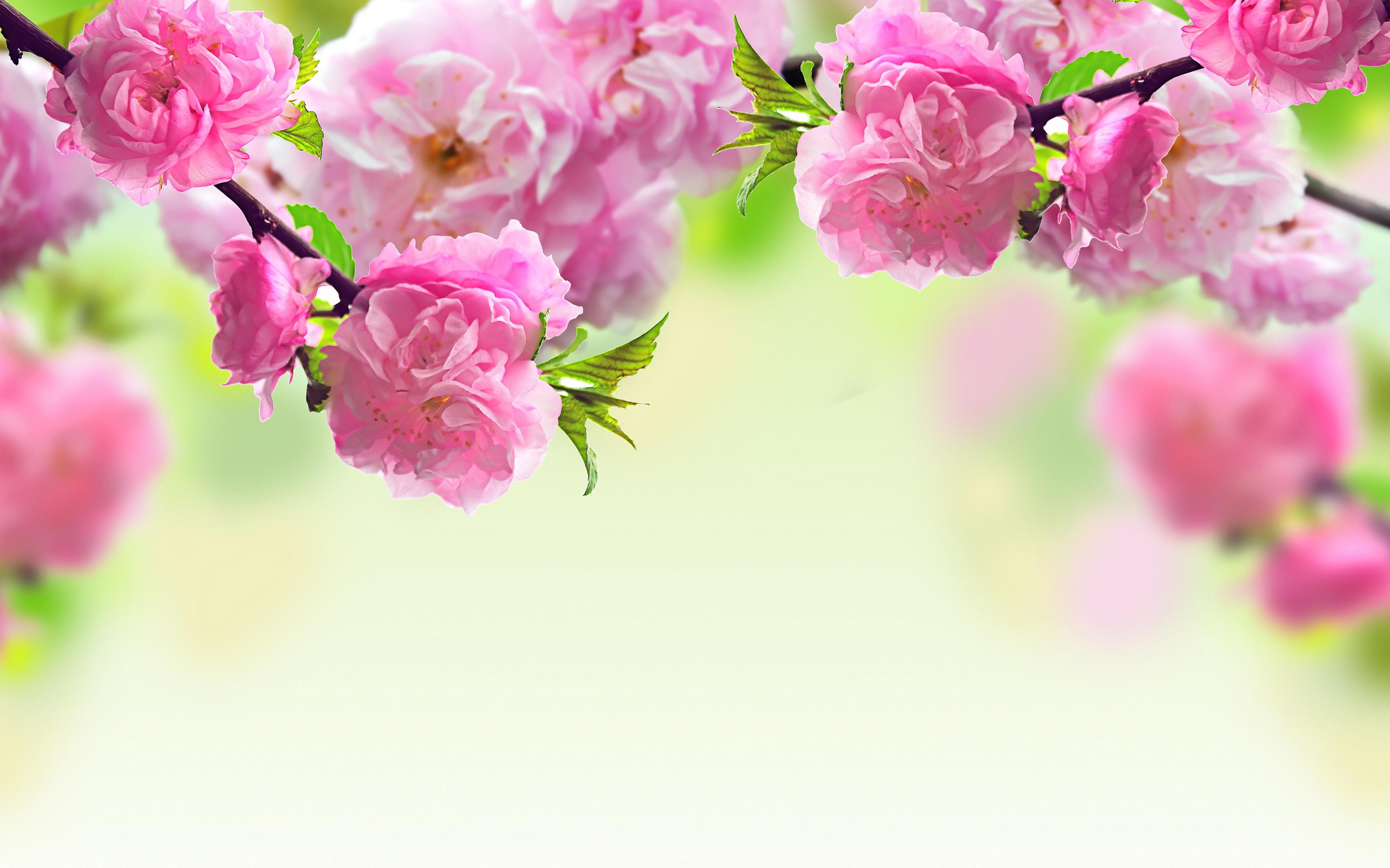 Pink Flower Wallpapers Wallpapersafari
