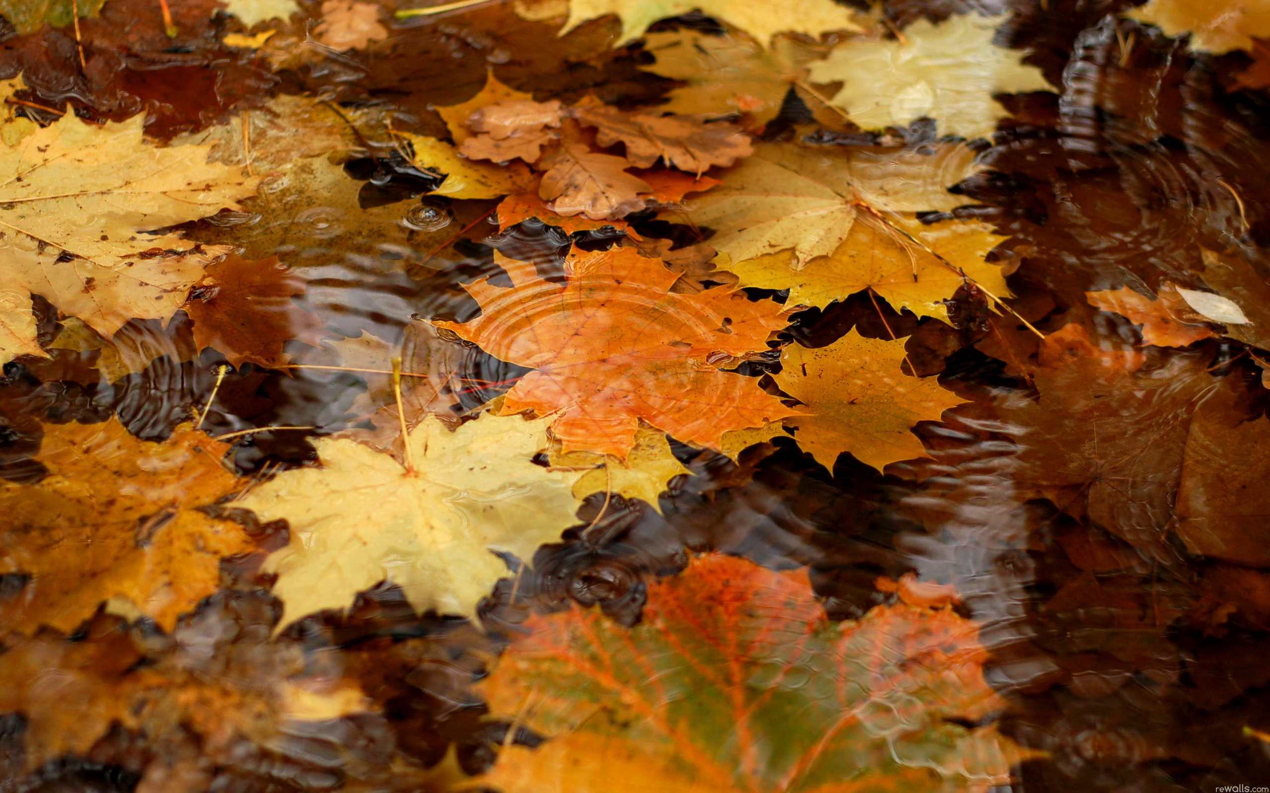 Autumn hd wallpapers Page 0 WallpaperLepi 2560x1600
