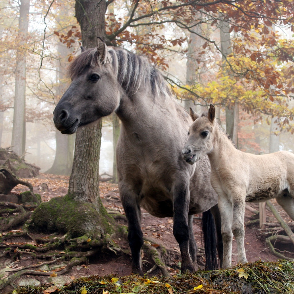 [49+] Wild Horses Desktop Wallpaper on WallpaperSafari