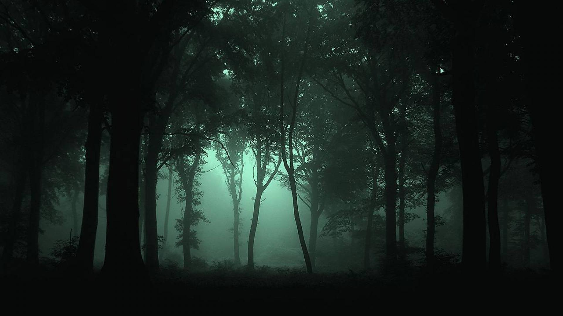 Dark Forest Wallpapers 1920x1080