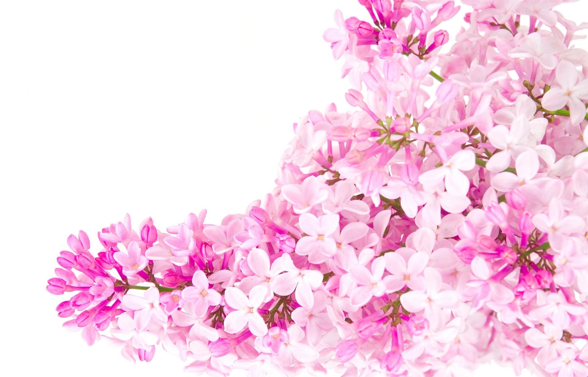 Pink Flowers Color Photo 23830799 Fanpop