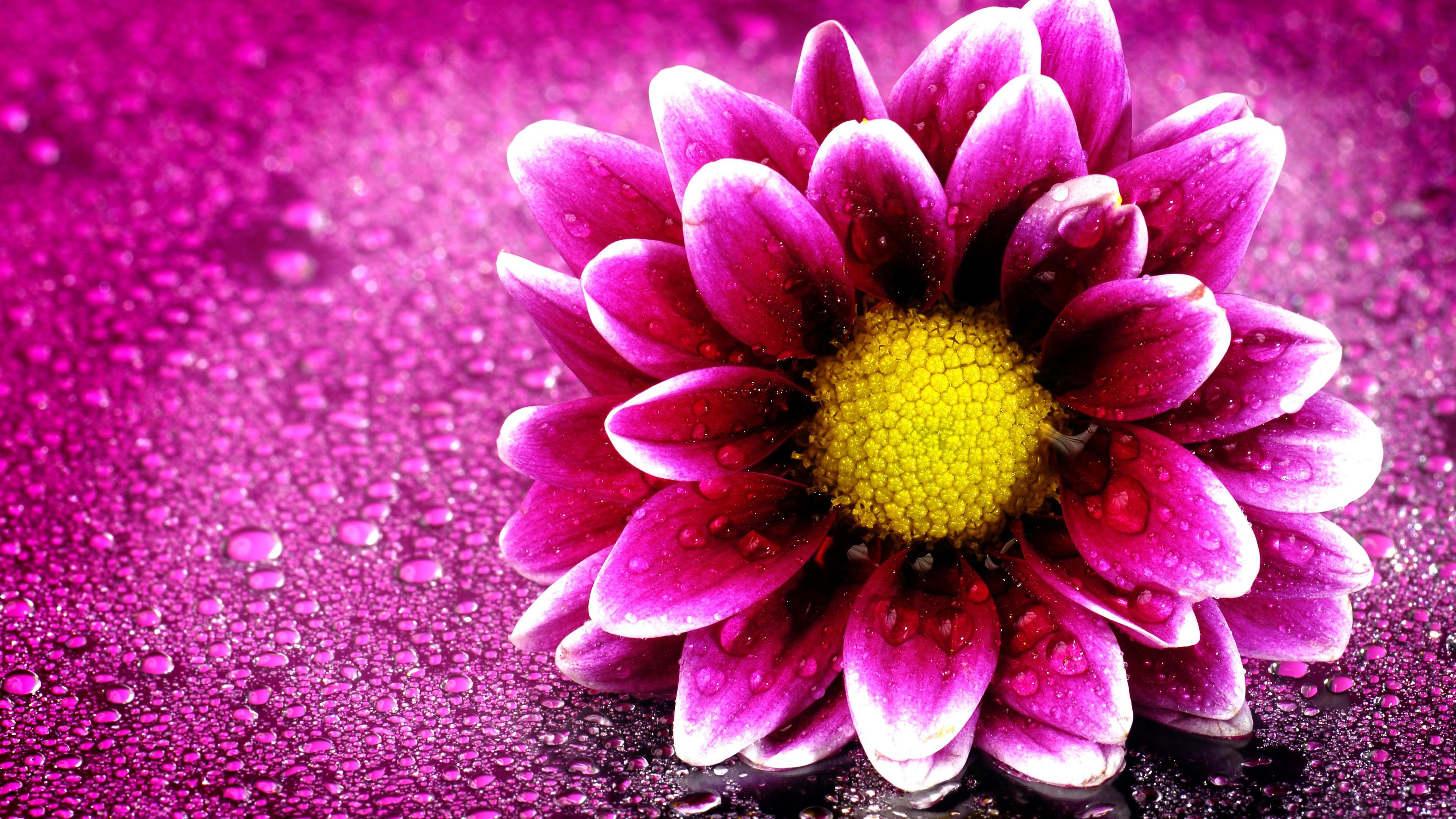 Flower Wallpaper Full Hd 3840x2160