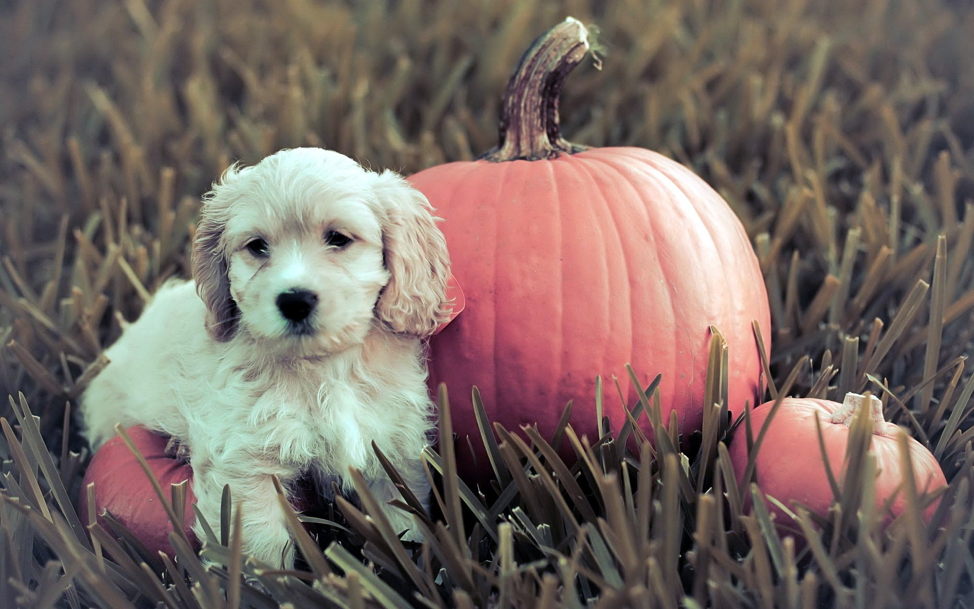 Halloween Pets Wallpaper Wallpapersafari