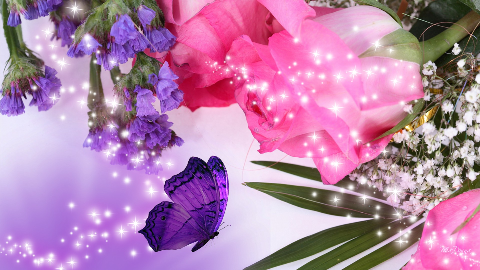 pink roses with purple butterfly][img]alignnone size full wp image 1920x1080
