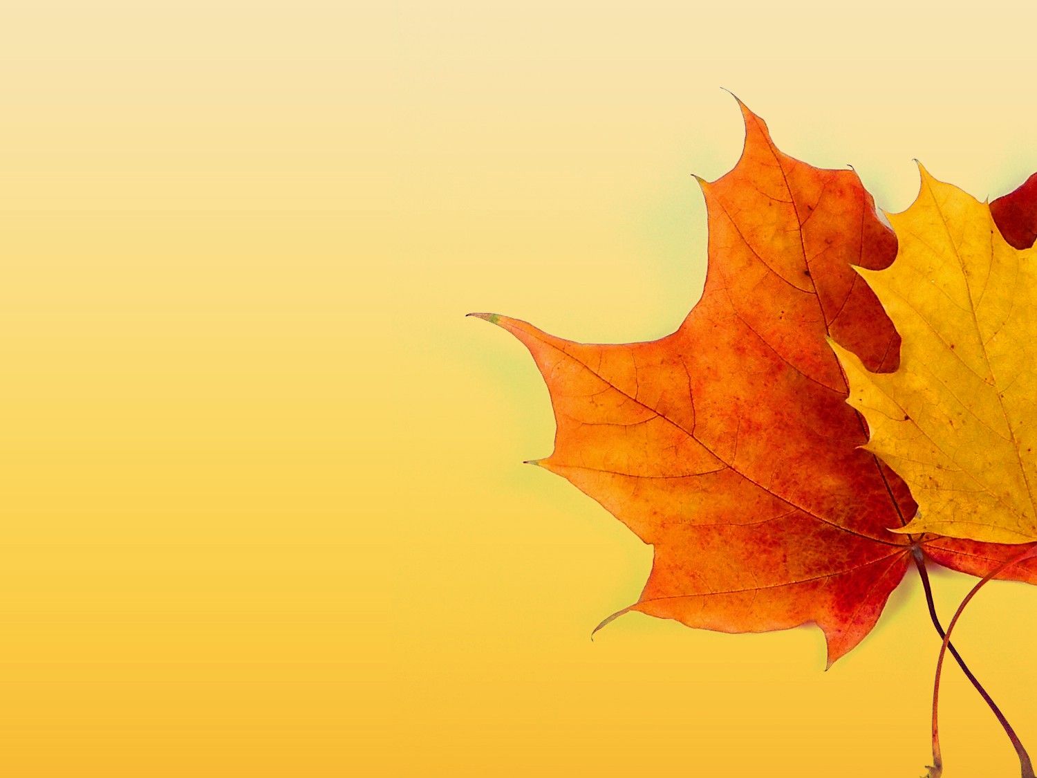 Fall Color Background