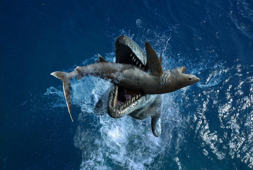shark megalodon wild nature 134553 1024x689