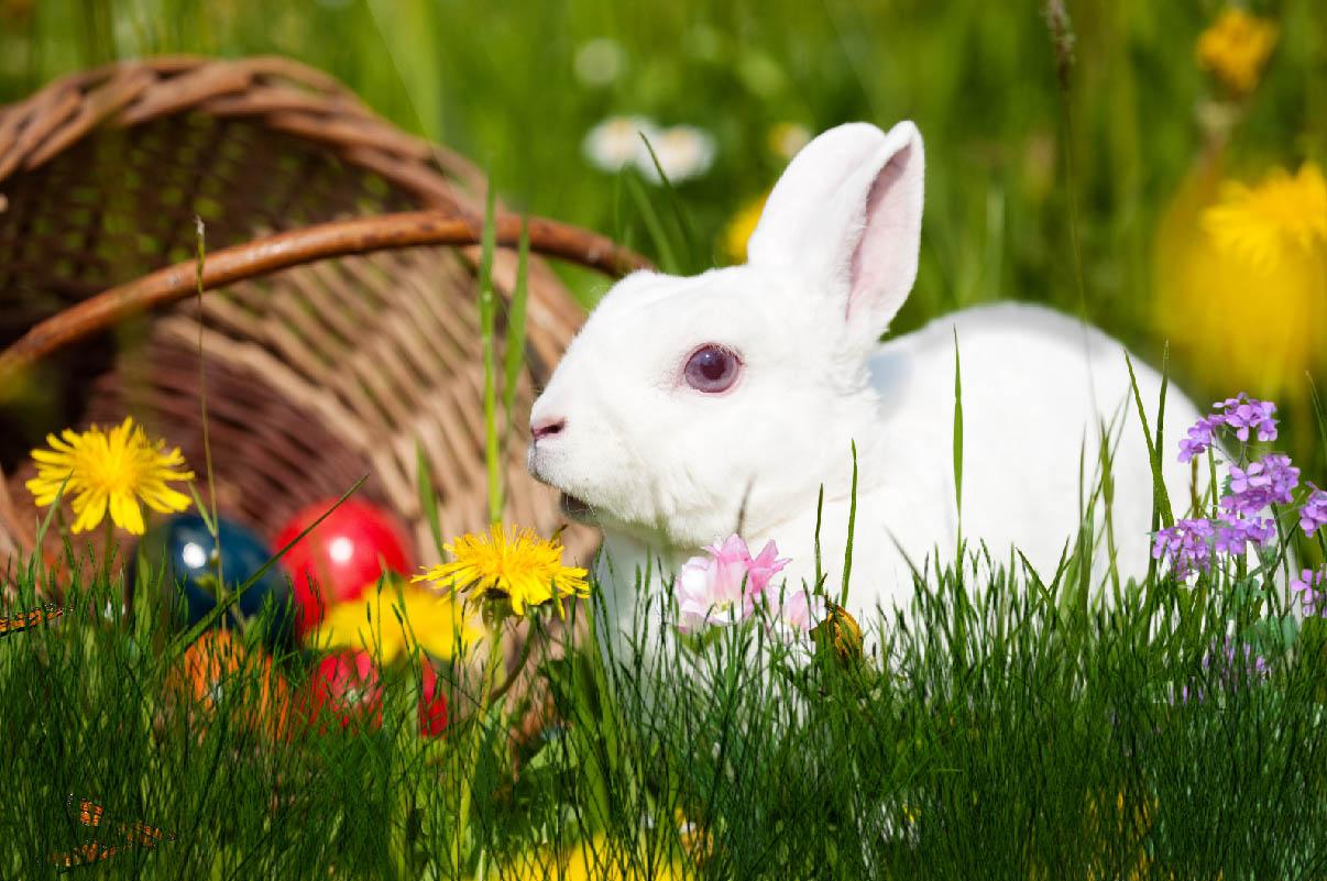 Free Download Easter Bunny Animated Wallpaper Desktopanimatedcom