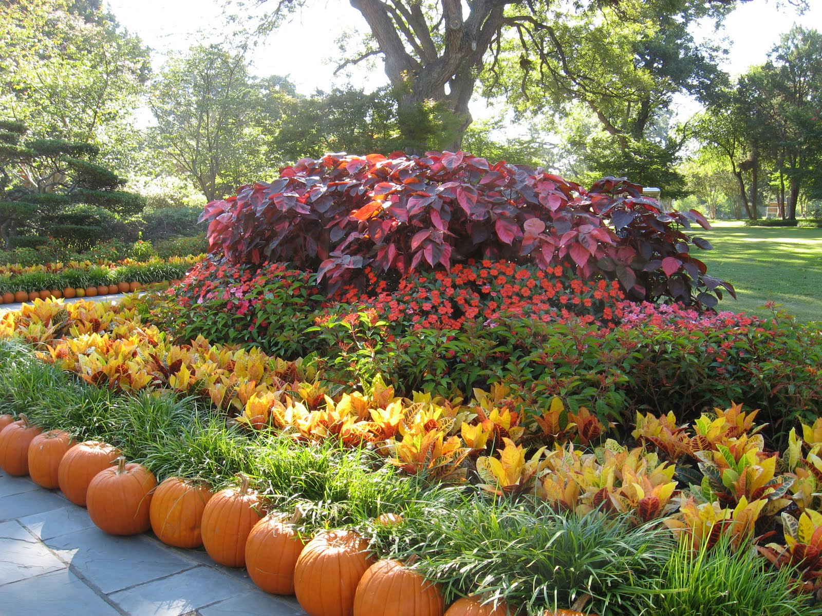 Fall Flowers And Pumpkins Wallpaper The beautiful fall flowers 1600x1200