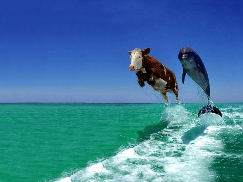 Funny Dolphins Wallpapers FREE WALLPAPERS 1024x768