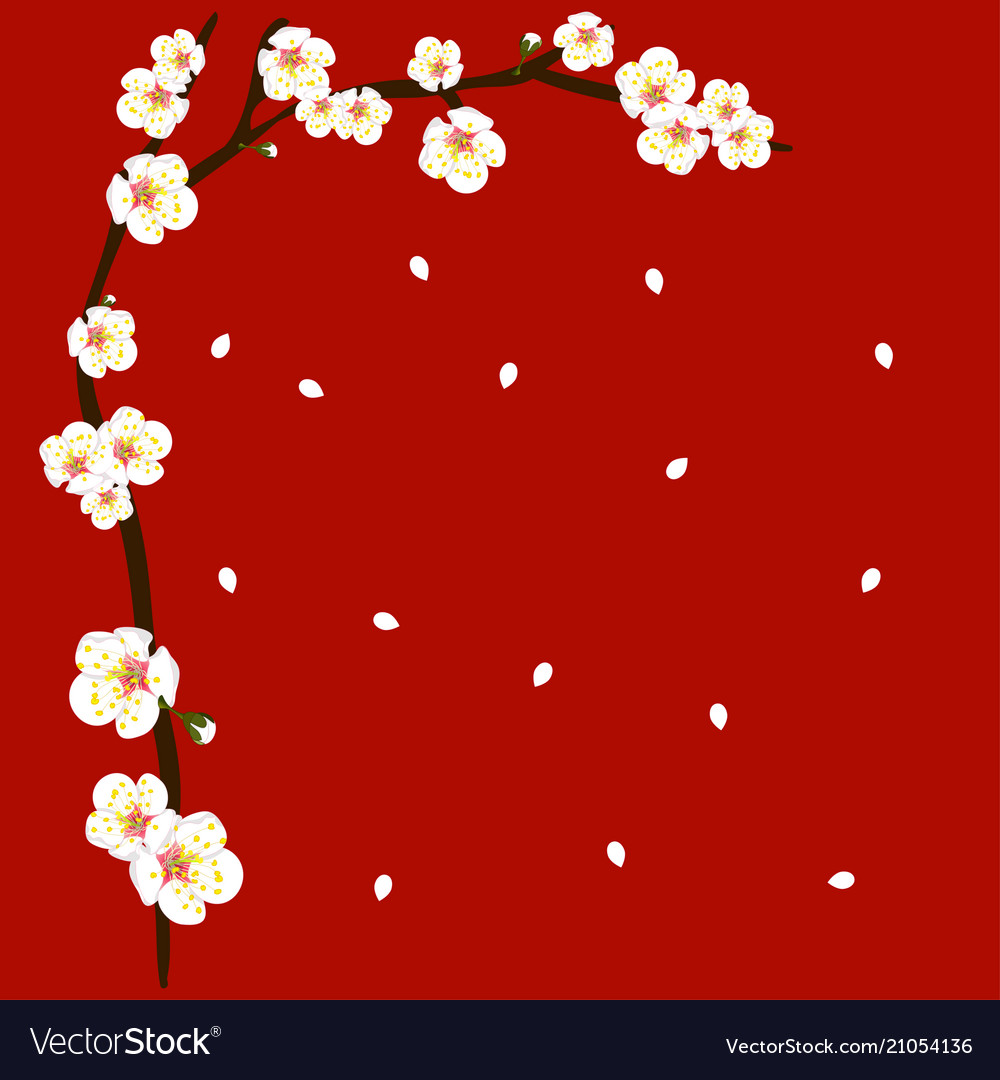 White plum blossom flower border on red background 1000x1080