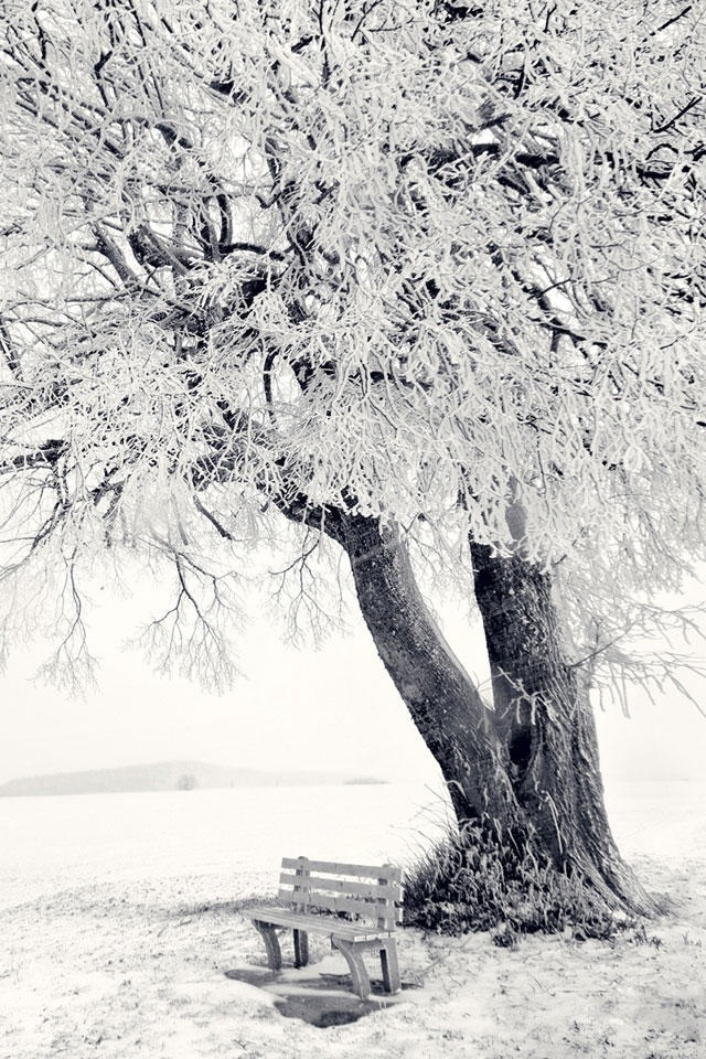 Tree In Winter Scenery Iphone 4 Wallpapers 640x960 Hd Iphone 640x960