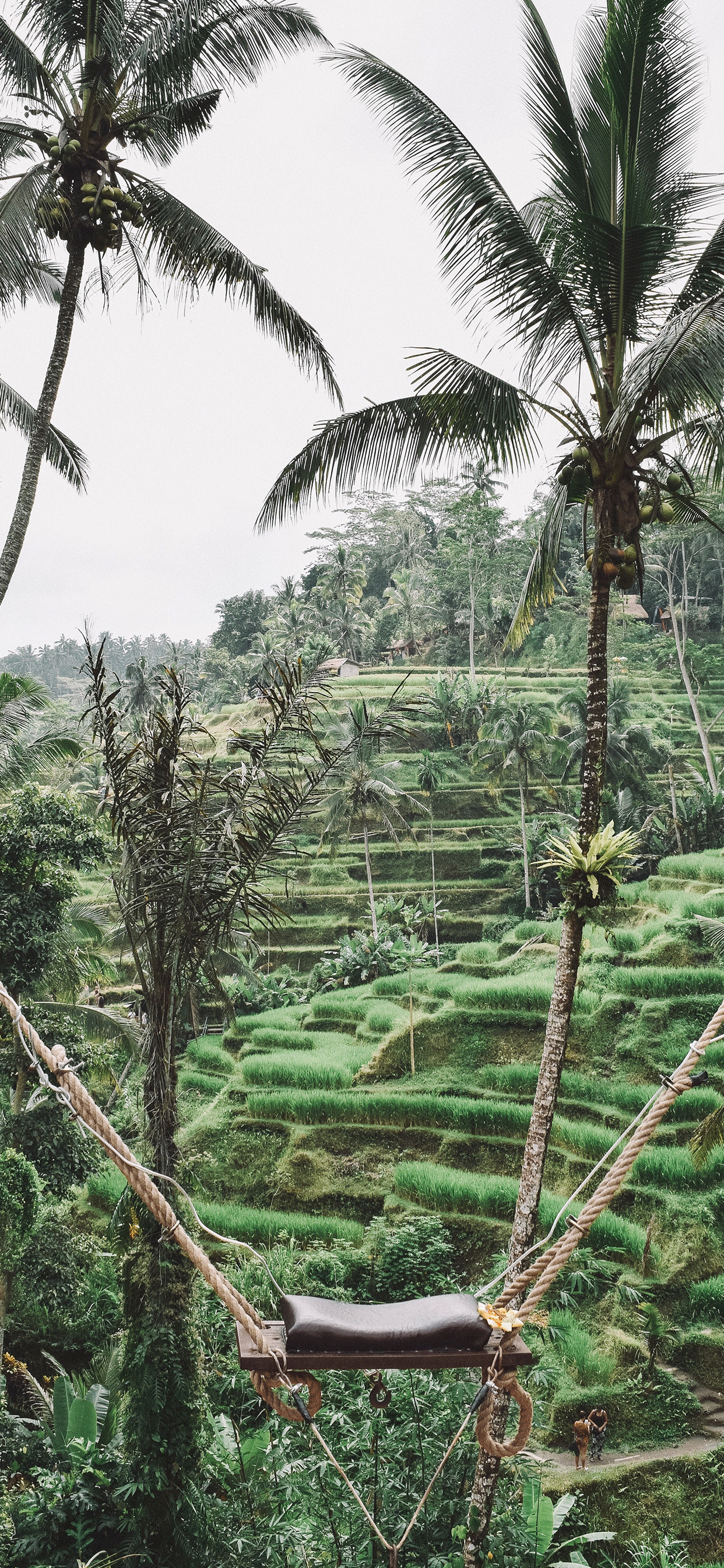 Ubud Wallpaper for iPhone X 8 7 6   Download on 3Wallpapers 1242x2688