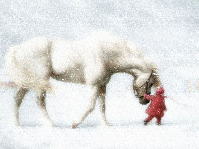 URL httpquotekocomhorse with child run picture wallpapershtml 800x600
