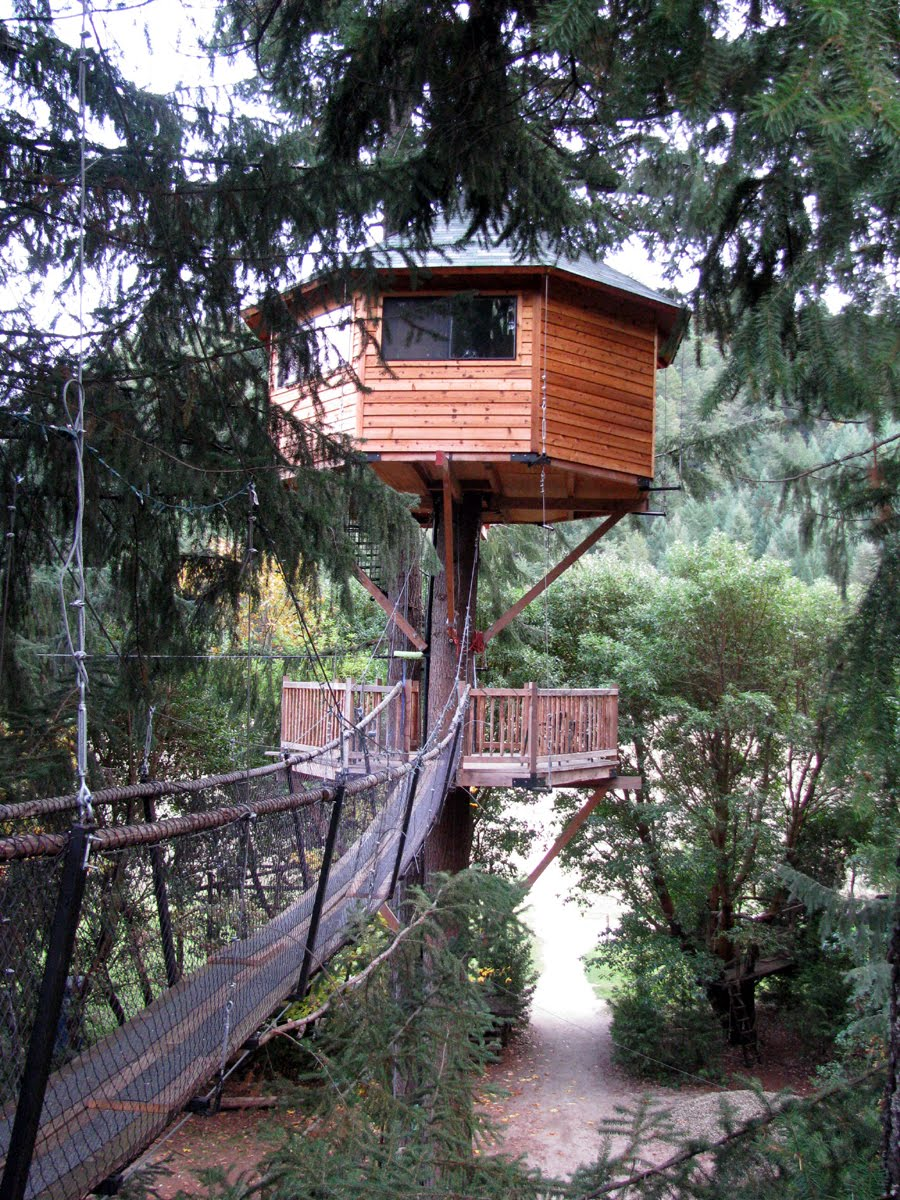 amazing tree house wallpapers amazing tree house wallpapers 900x1200