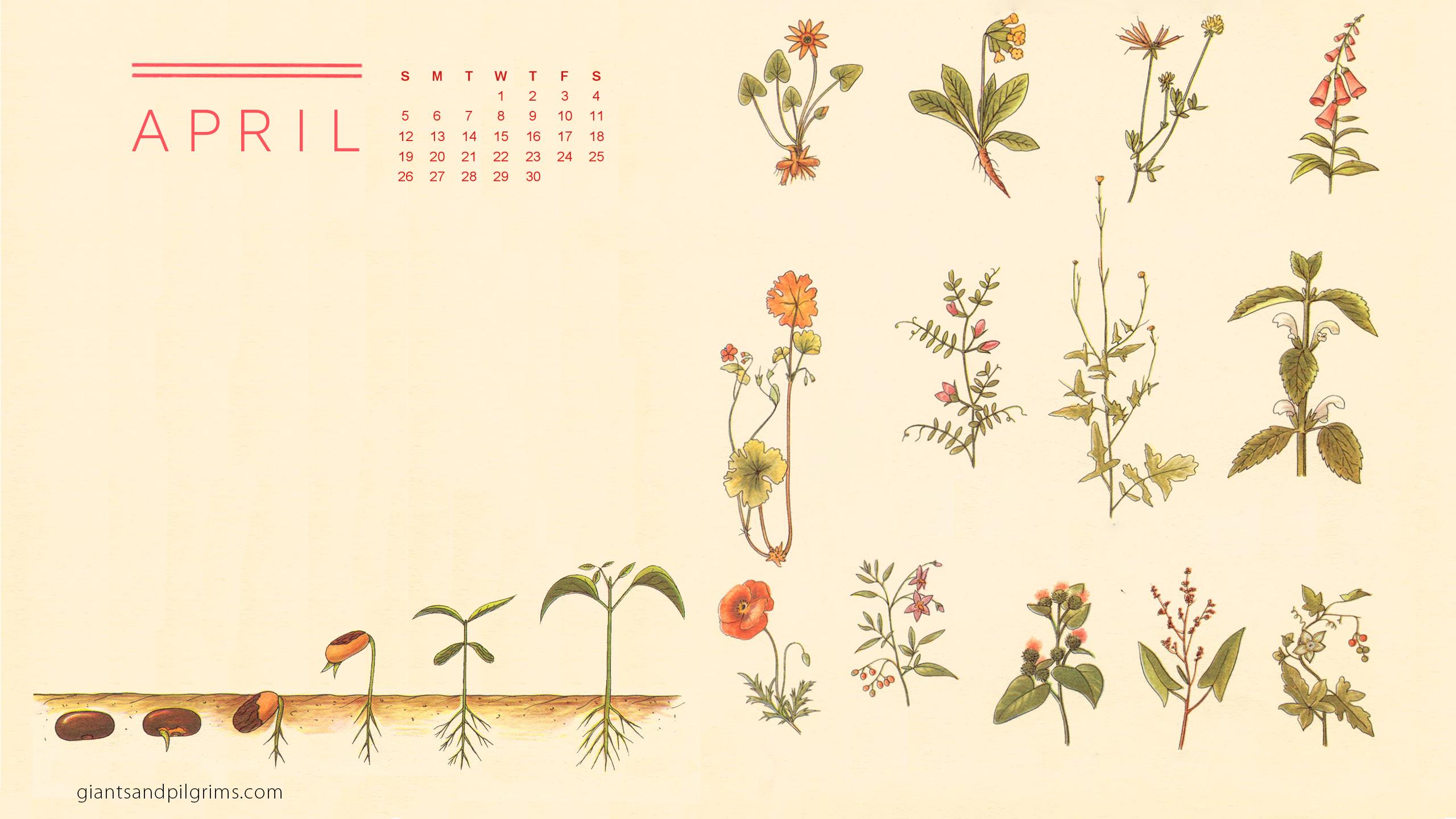April 2015 Desktop and iPhone Wallpaper Giants Pilgrims 2560x1440