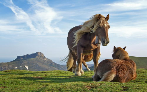 Hill Horses Picture For iPhone Blackberry iPad Hill Horses 500x313