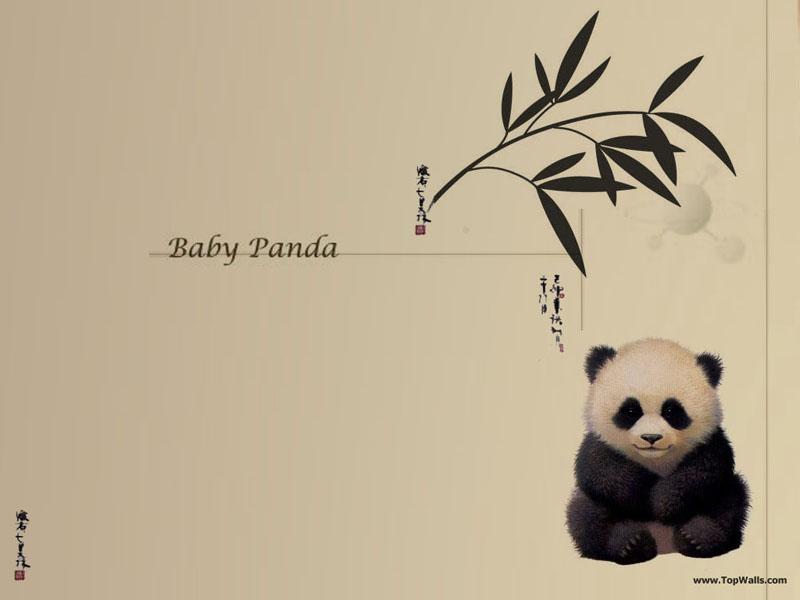 Baby Panda wallpaper   Pandas Wallpaper 631180 800x600