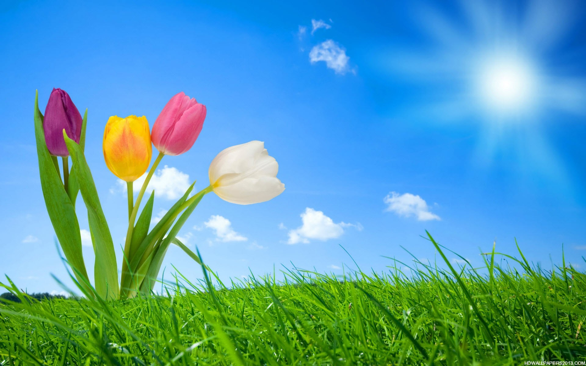 Spring Nature Wallpapers HD Wallpapers Spring Nature Wallpapers 1920x1200