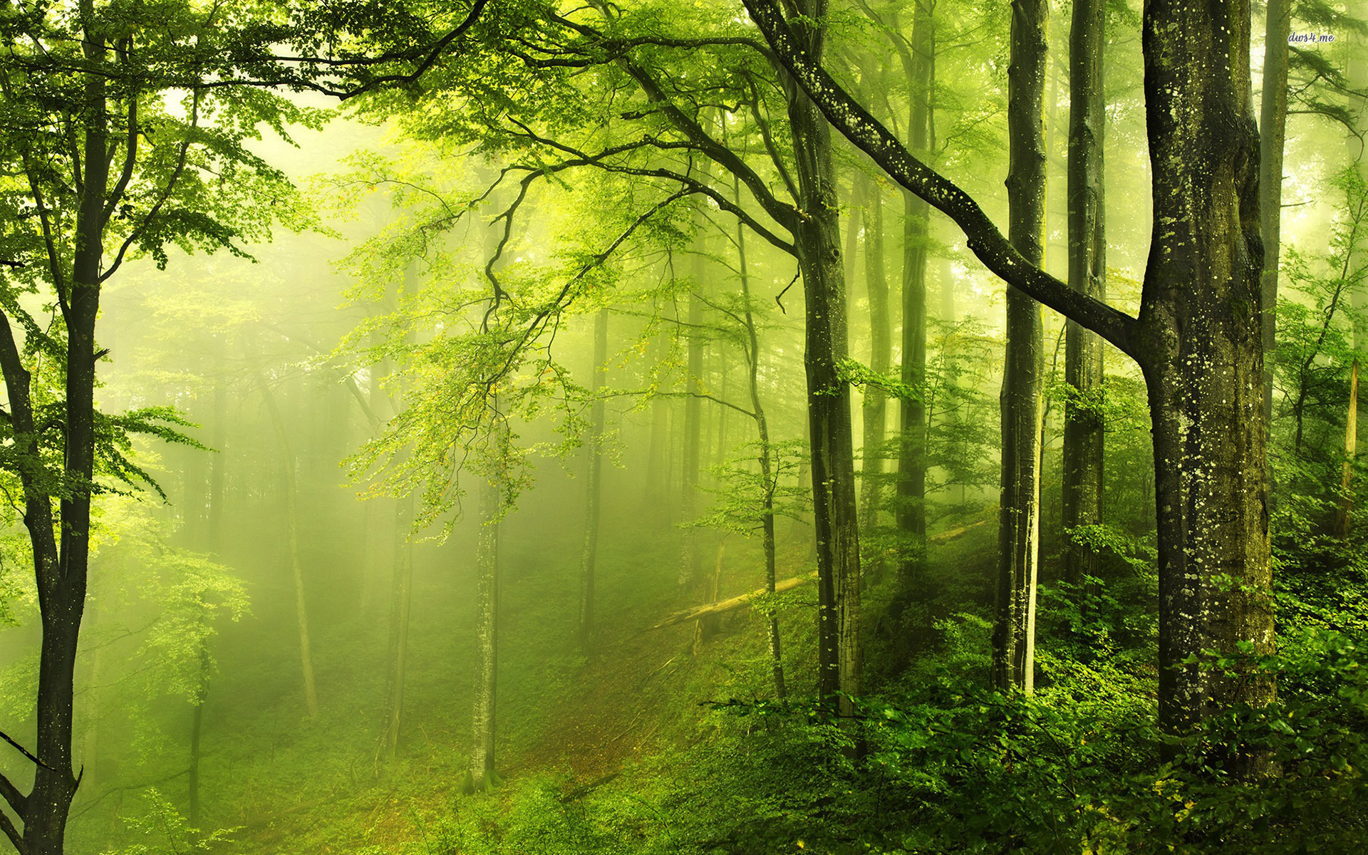 Beautiful Green Forest Nature Wallpaper Desktop Wallpaper with 1920x1200