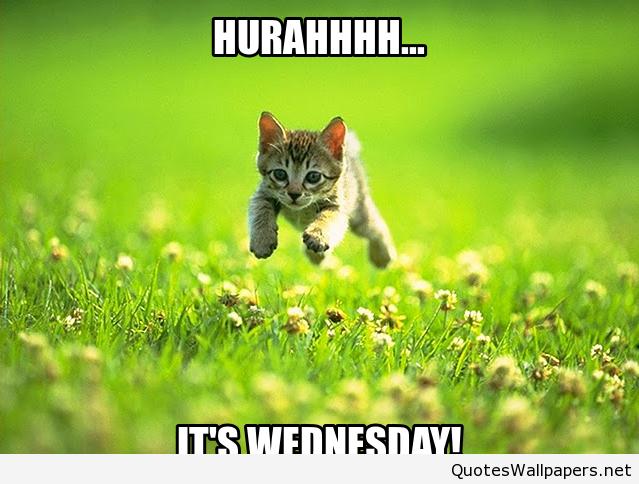 45+] Funny Wednesday Wallpaper on WallpaperSafari