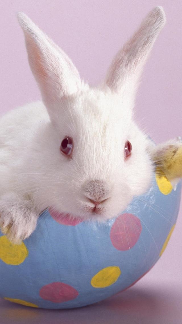 Download Cute Easter Bunny iPhone 5 HD Wallpapers Gambar Joss 640x1136