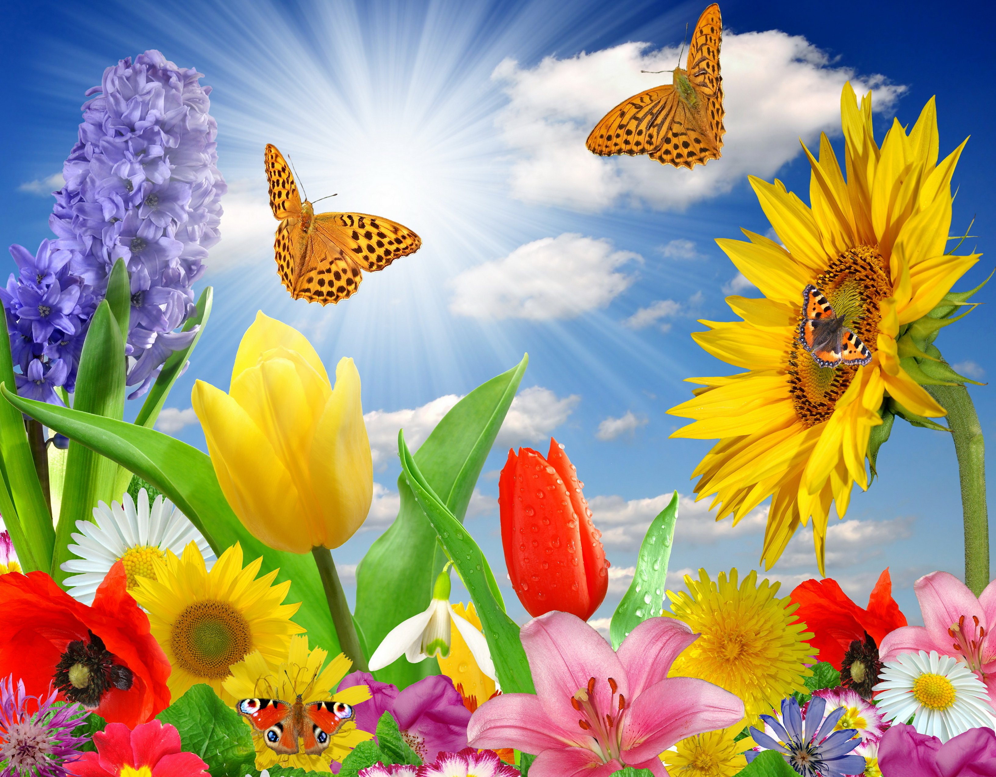 Butterfly and flowers wallpaper | Wallpaper Wide HD