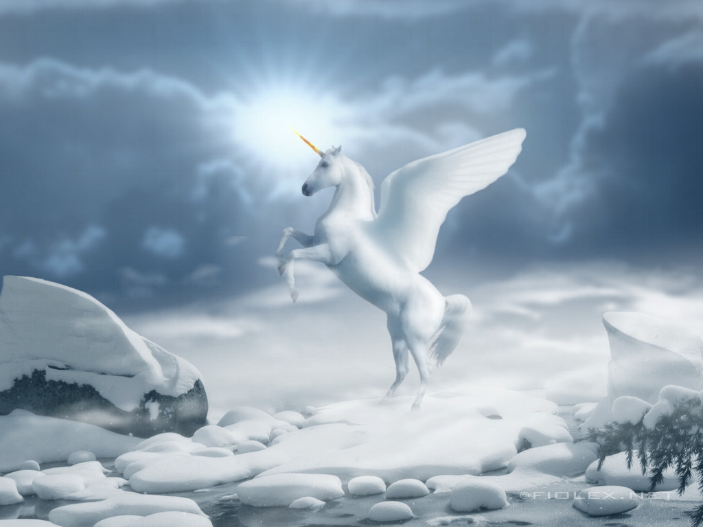Free Download Beautiful Wallpapers White Horse Wallpapers