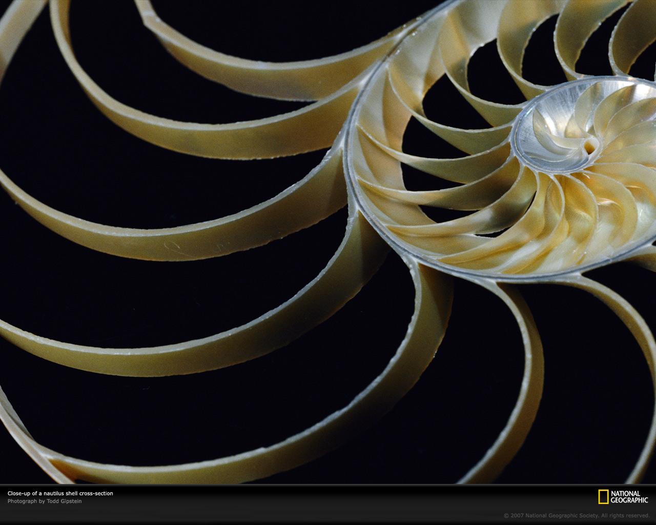 Chambered Nautilus Photo Nautilus Wallpaper Download Photos 1280x1024