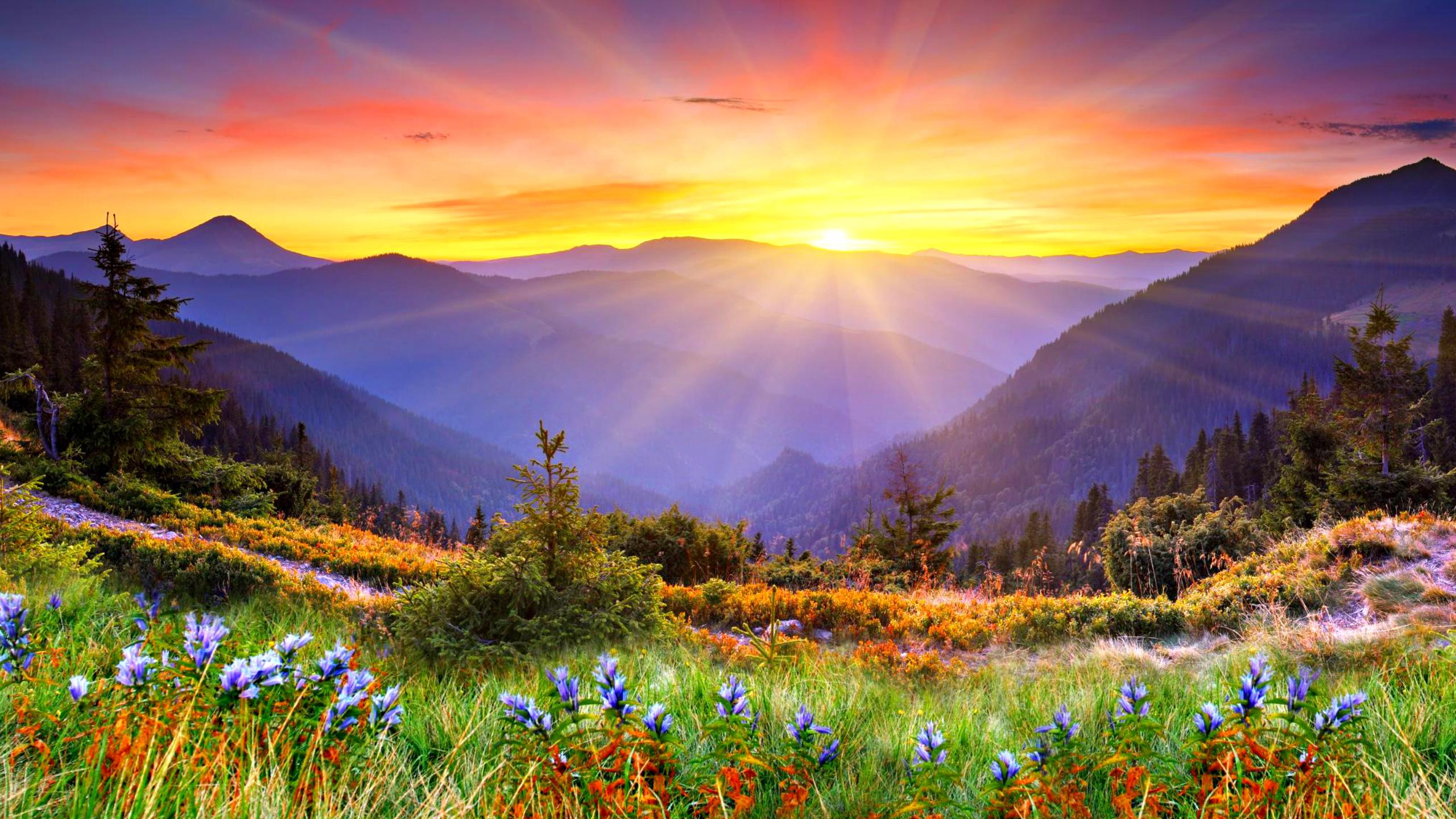 Beautiful Sunrise Wallpaper 34171 34940 Hd Wallpapersjpg 2560x1440