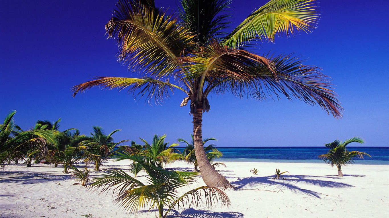 Palm Trees On The Beach: Beach Palm Trees Wallpapers