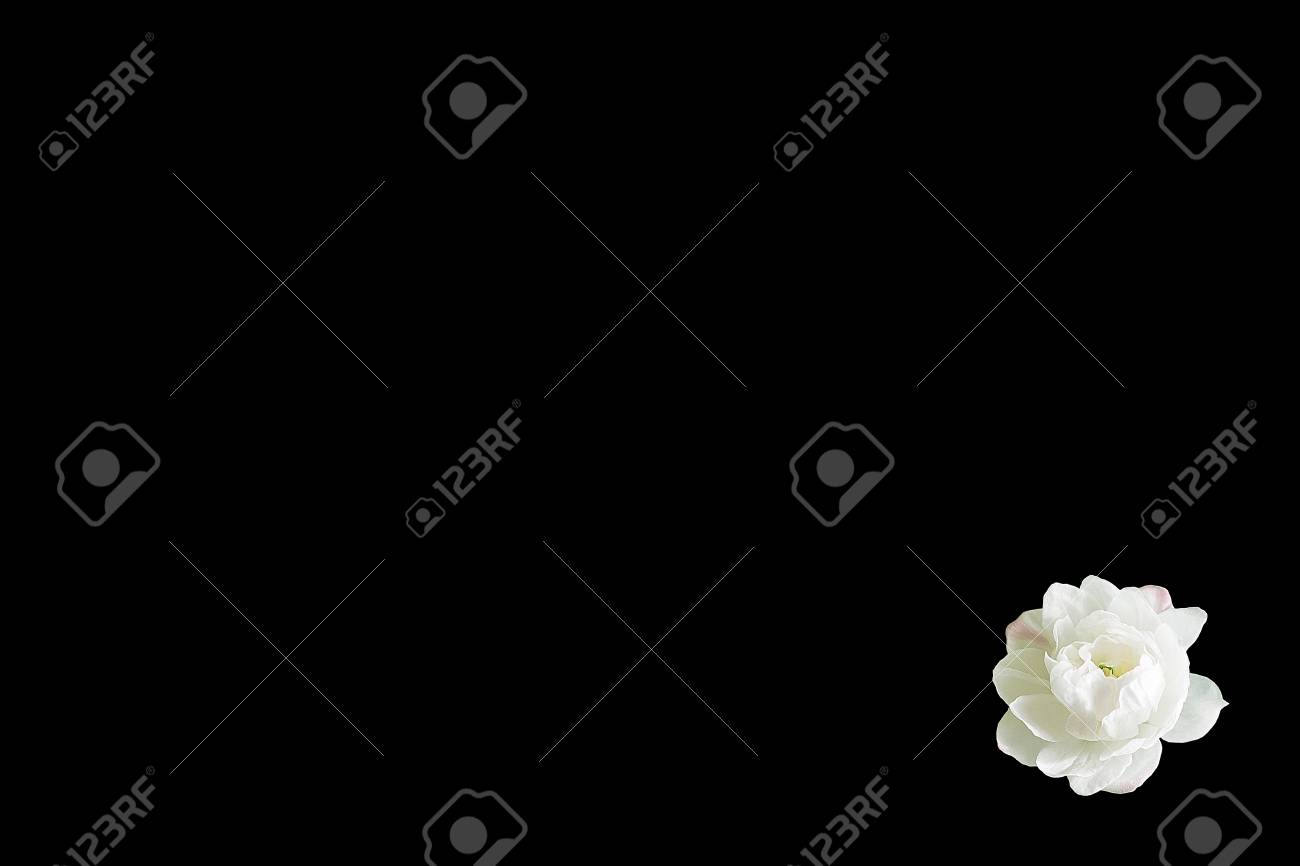 One White Flower Isolated On Black Background In The Lower Right 1300x866