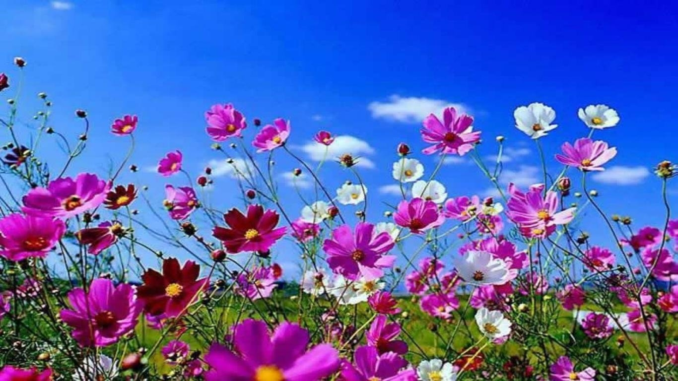 Spring Desktop Wallpapers And Backgrounds   Picseriocom 1366x768