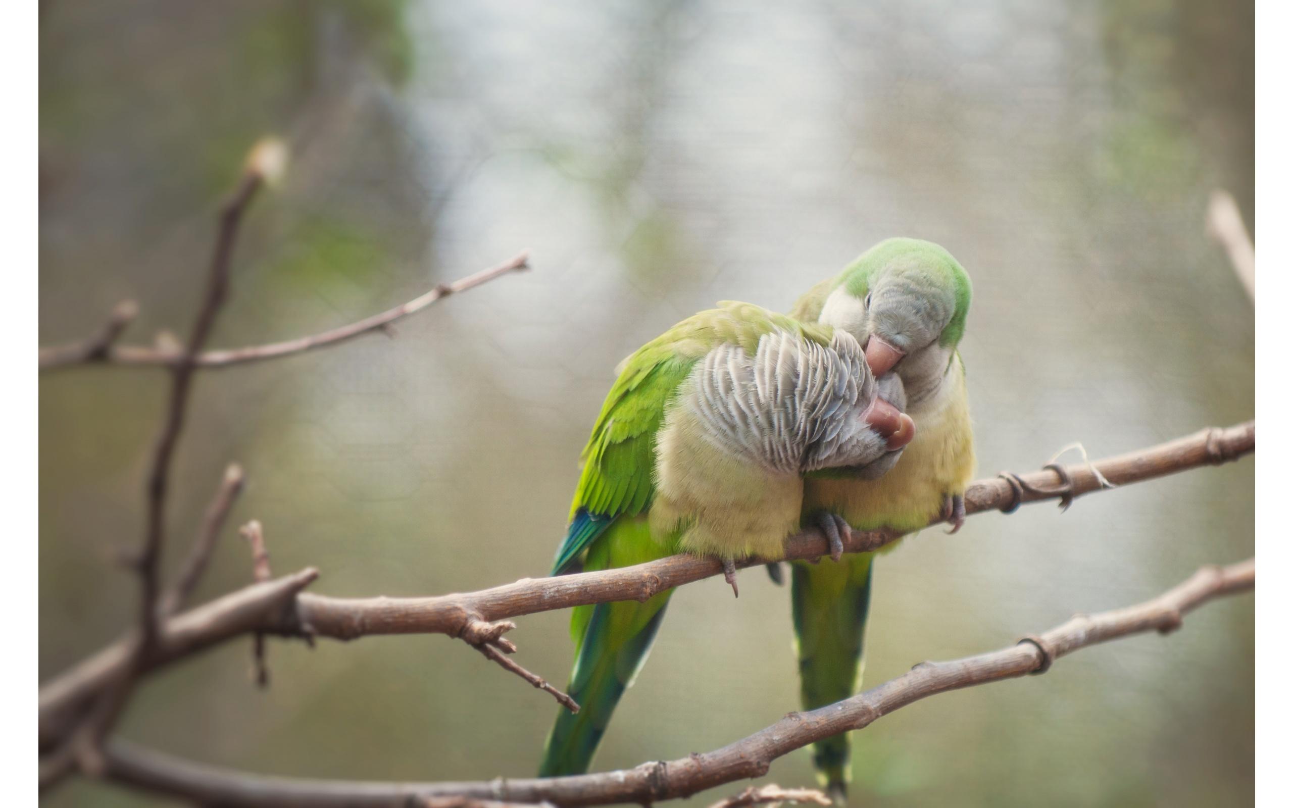 Free Download Love Birds 2560 X 1600 Download Close 2560x1600 For Your Desktop Mobile Tablet Explore 76 Wallpaper Of Love Birds Free Wallpapers And Screensavers Birds Free Love Screensavers