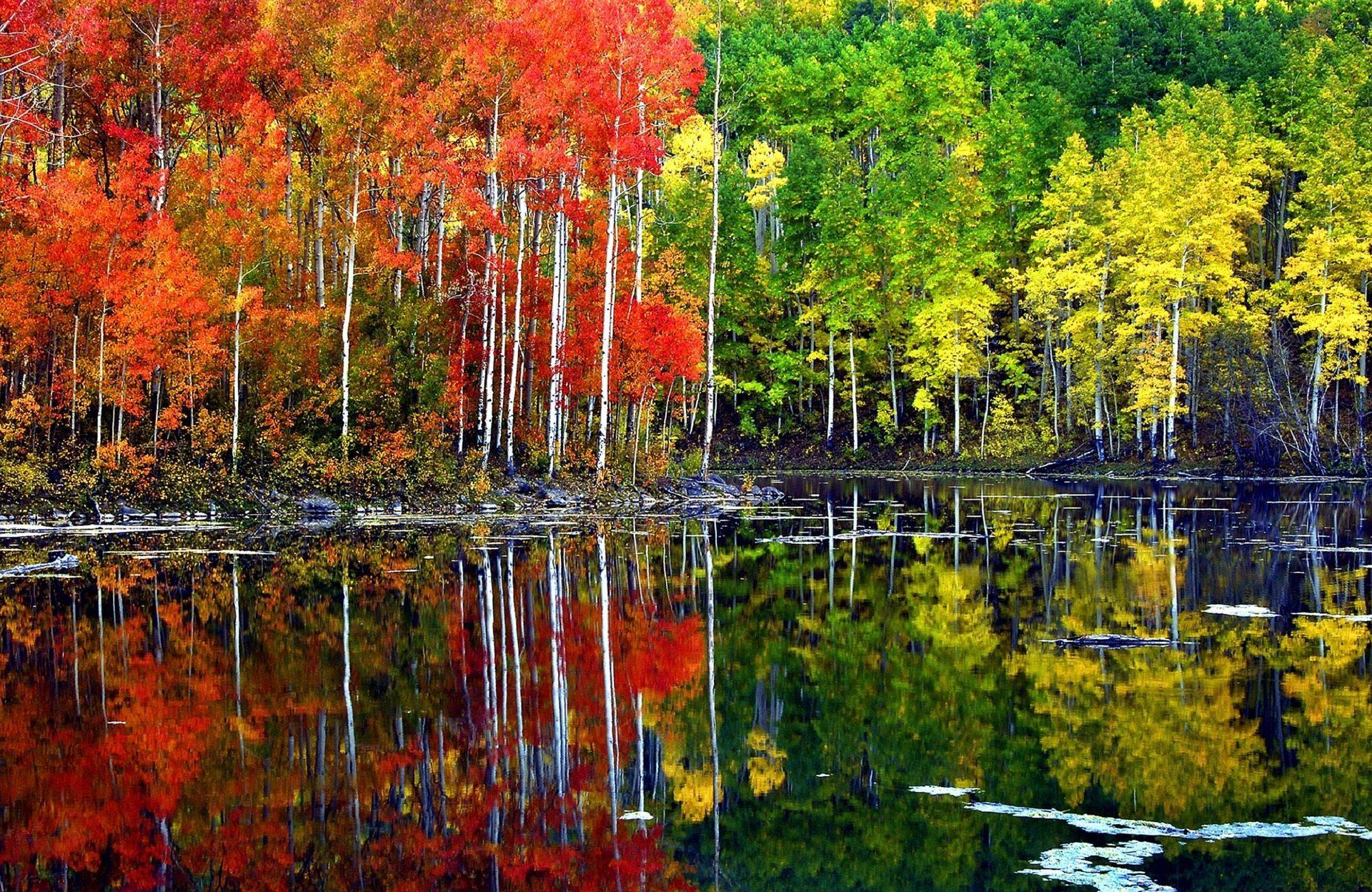 Aspen Tree Wallpaper HD for Download 1920x1248