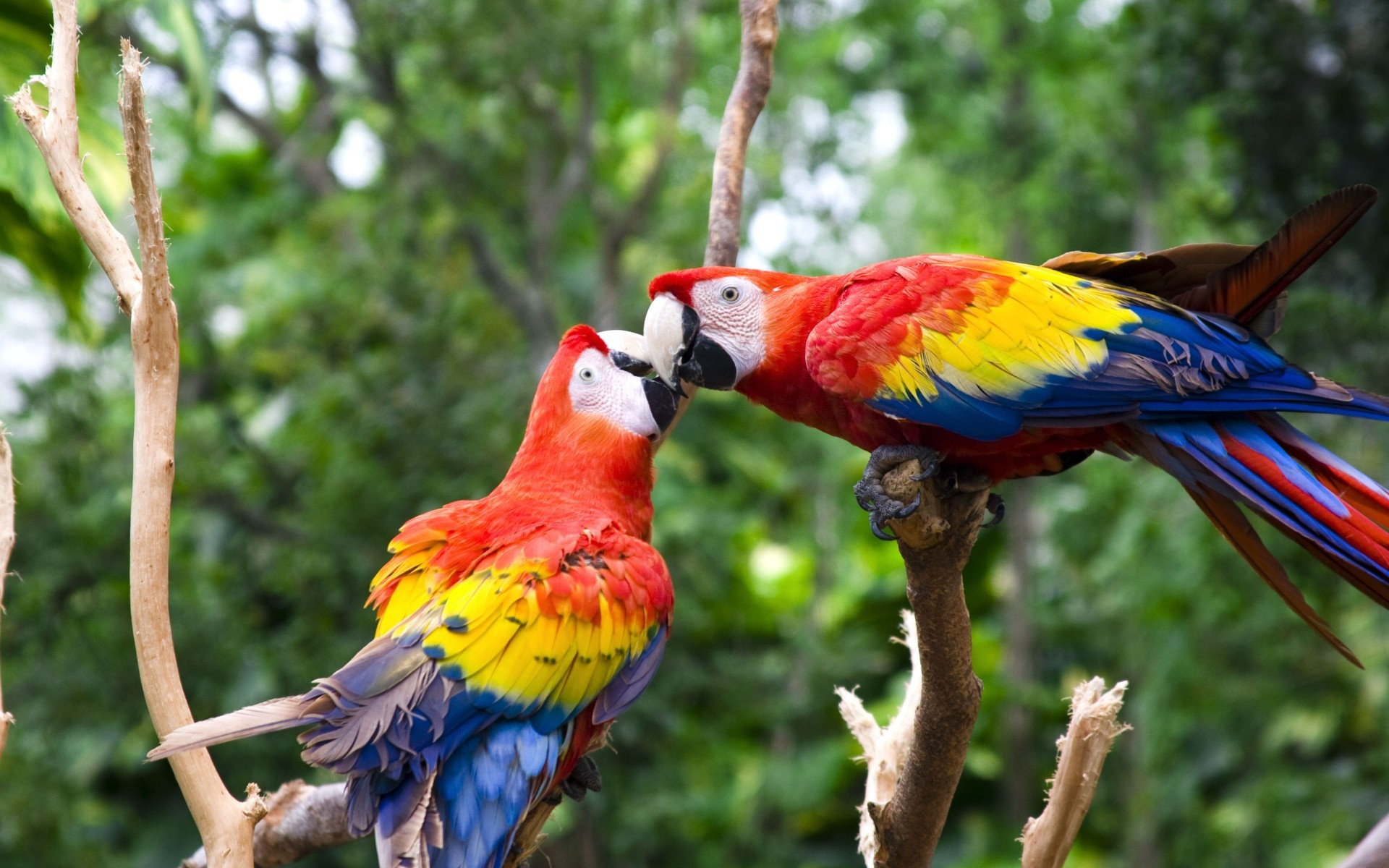 Free Download 55 Cute Love Bird Colorful Parrot Hd Wallpapers Download 1920x1200 For Your Desktop Mobile Tablet Explore 30 Beautiful Wallpapers Pic Beautiful Wallpapers Pic Pic Of Beautiful Wallpaper