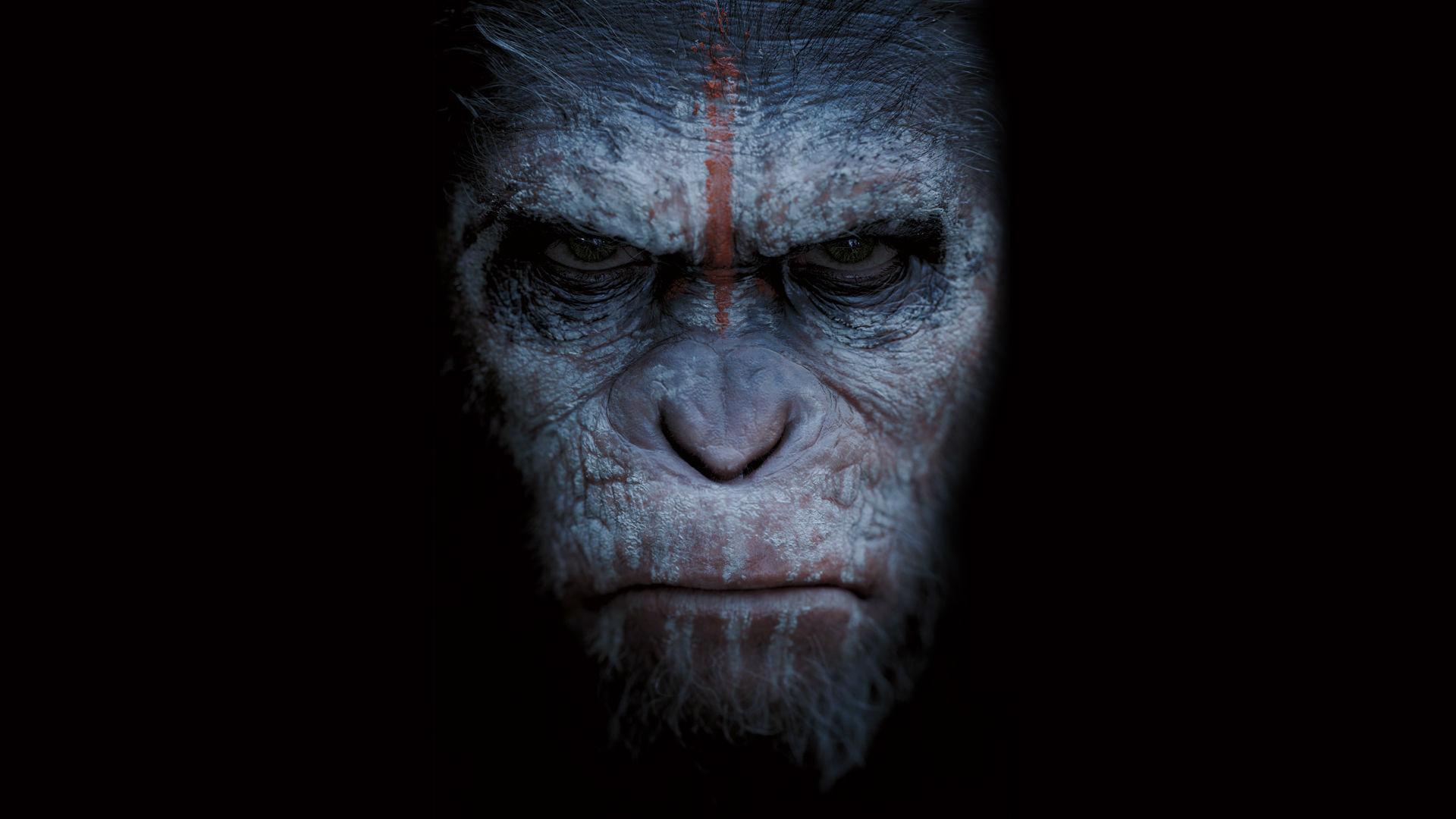 Bathing apes 6994760 1920x1080