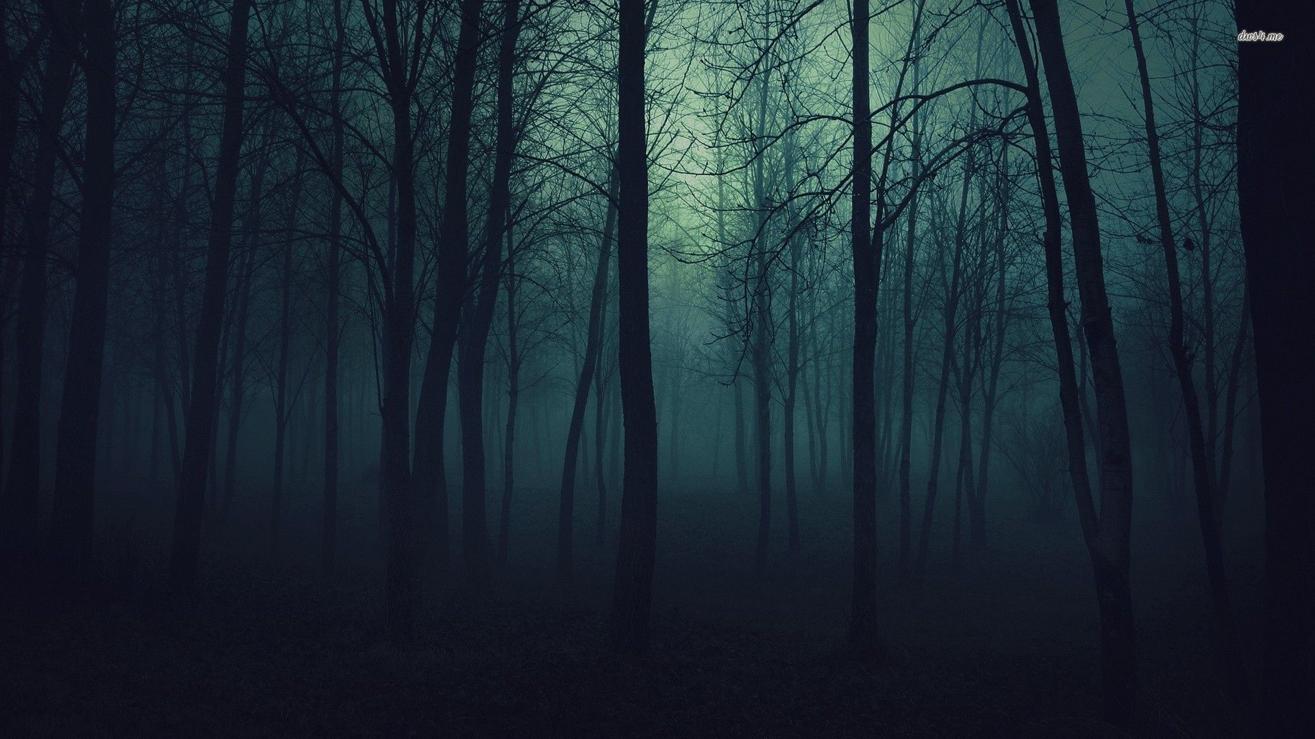 dark forest wallpaper hd wallpapersafari