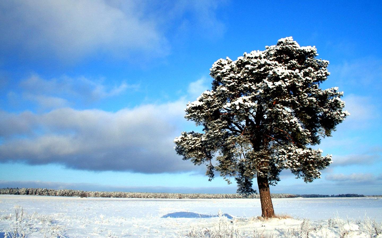 1440900 Widescreen Winter Snow Scenes   Dreamy Winter Snow Wallpaper 1440x900