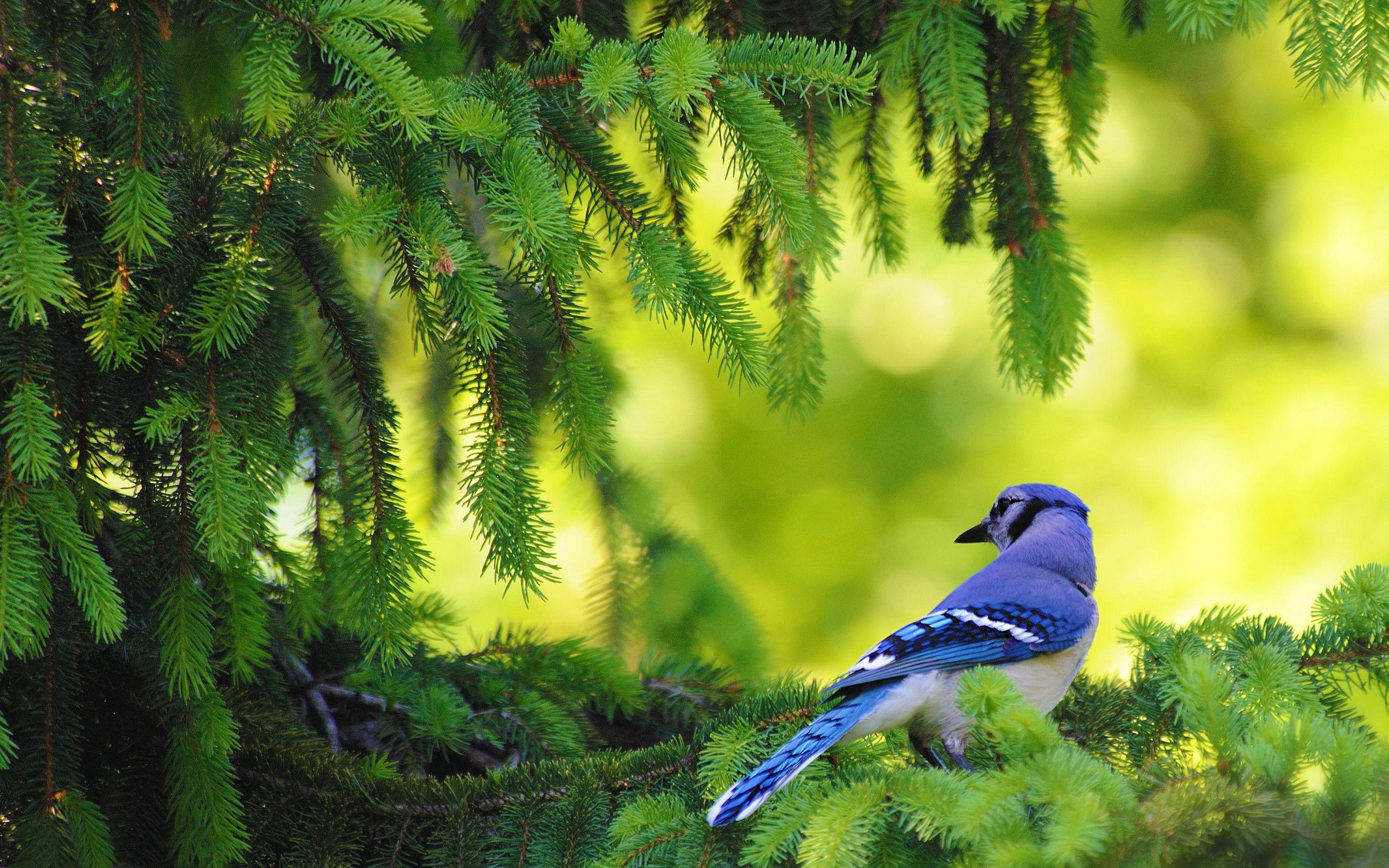 bird wallpapers blue walls 2560x1600 2560x1600