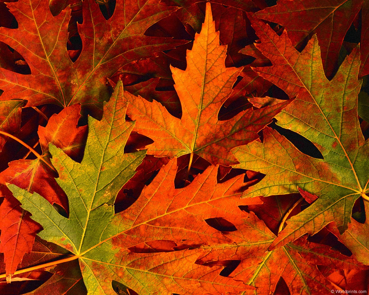 desktop wallpaper fall foliage   wwwwallpapers in hdcom 1280x1024